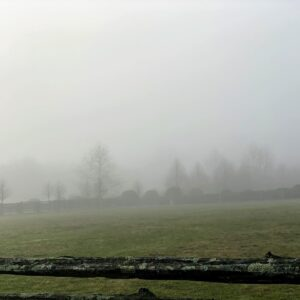 Much of last week was gray. The skies were cloudy and the morning atmosphere was thick with fog. This is a photo looking across the horse paddock – so dense, little can be seen in the distance.
