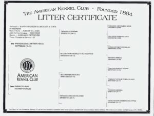 Part of responsible breeding is registering each litter and each animal through its proper kennel club. Our club is the American Kennel Club or AKC. Each litter and puppy get individually registered. Here is a copy of a registration certificate. When a pup goes home, its family gets a copy of the certificate so they can register them with their names. Registering dogs is important to do so both the AKC and the breeders can keep track of their genetics and lines.