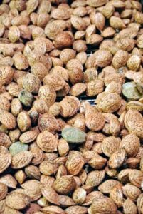After drying, almonds should rattle when shaken. The almonds should also be crisp and brittle. Any rubbery kernels need to be dried some more. Before storing almonds, they can be placed in the freezer for a couple of days to to kill any possible storage pests.