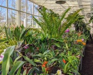 The central greenhouse at my Bedford, New York farm is home to hundreds and hundreds of beloved plants. I enjoy learning about and caring for the many rare and unusual specimens in my collection. My orchid collection takes up two long sliding tables.