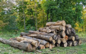 Here are just some of the logs I saved for milling. Whenever a tree falls or is cut down, I save it in a pile designated for either the sawmill or the tub grinder depending on its appearance and condition. Those earmarked for milling are then limbed, or stripped of branches.