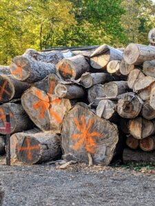 """Mauricio came by to mark the trees - those with an """"x"""" can be milled here at the farm with his portable machine. Those marked with an asterix sign are too big and need to be transported to a larger sawmill."""