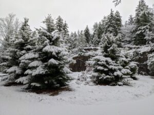 This is just out my front door at Skylands – the circular driveway around the trees is underneath the snow covered ground.