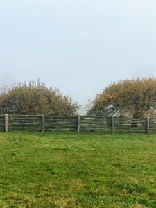 Here, the ancient apple trees in the middle of the paddock are visible, but the landscape behind it is not - still blocked by fog. Last night was also quite stormy - high winds and rain. Today is expected to be sunny with some clouds with temperatures in the low 50s - conditions that will show a different, but still gorgeous autumn scene.