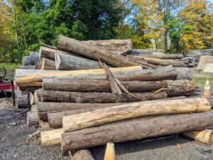 Each log that is cut is carefully inspected and sorted by species, size and end use. The logs must be very straight - not curved, and must not show any signs of rotting. Rotting logs will fall apart when milled.