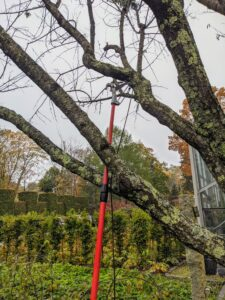 He also uses a telescoping pole pruner. This tool is great for trimming branches that are at least an inch thick. As I always say – the right tool for the right job! There are two basic types of pruning cuts - thinning cuts and heading cuts. Thinning cuts reduce the number of branches to allow more air and sunlight through the specimen. Heading cuts remove just a portion of an existing branch encouraging new side growth.