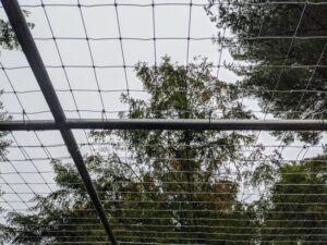 Here is the netting secured above to keep the hawks, falcons and other aerial predators out. The wire is also extended several inches down to keep burrowing vermin out of the enclosure.