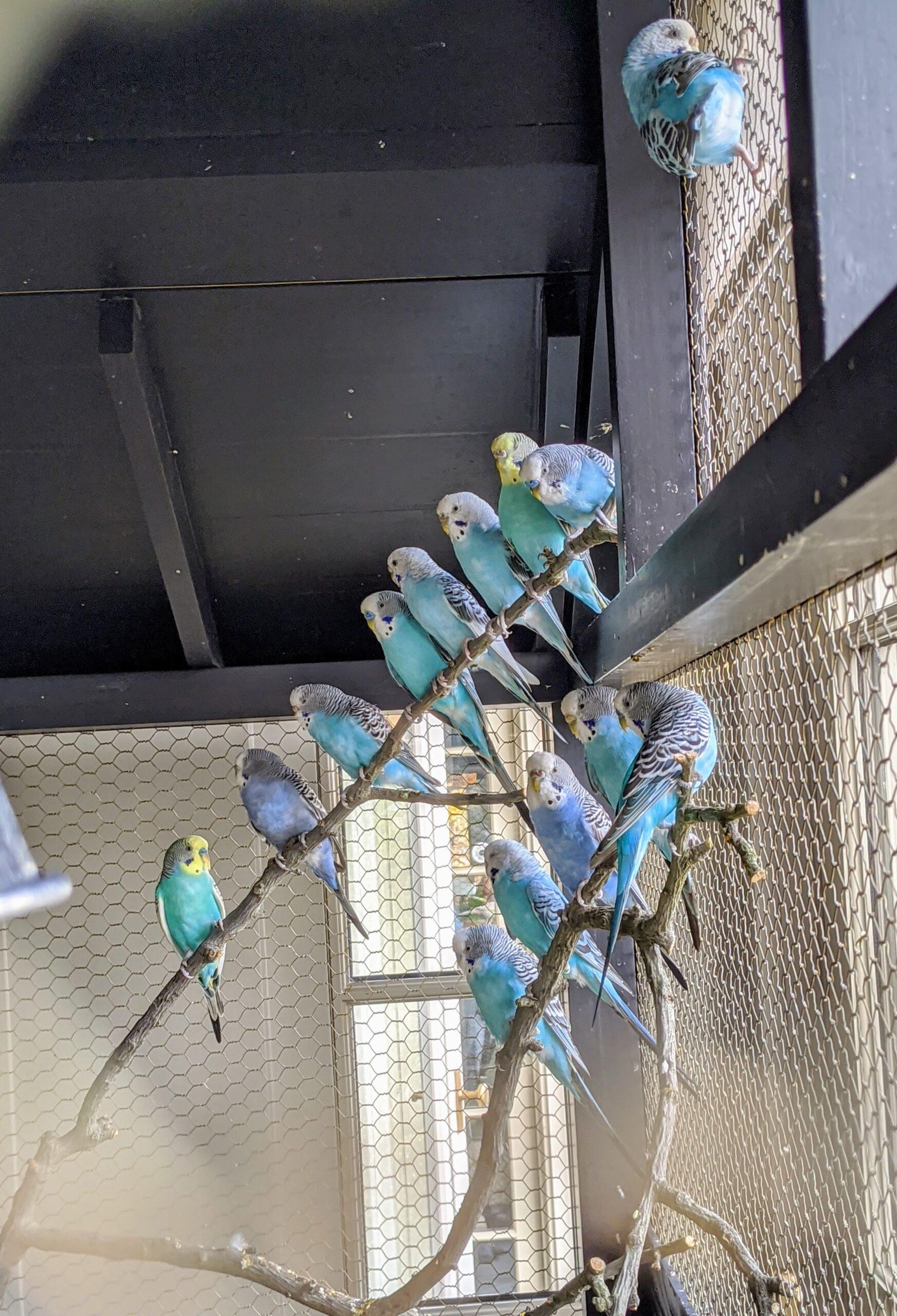 Parakeets At The Farm The Martha Stewart Blog