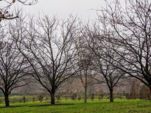 The crabapple trees have dropped all their leaves - they look even more sinister with the backdrop of clouds.