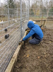 As each section of the fence is completed, the crew places edging stones along the fence line.