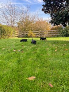 Here are the puppies in my family's backyard. They were driven back from Indiana by my friend, Fabian Negron. Once they arrived, they got fed lunch and one of the girls, Cate, was picked up by her new guardian, Lynn, and her mother, Roz.
