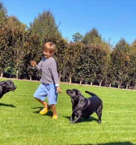 This is a fun picture of Martha's grandson, Truman, Mehndi, and Kima. It was taken at Martha's Bedford, New York farm. Truman is great around dogs. In fact, he wants to start showing my Labradors in AKC Junior Showmanship competitions. To all my fellow exhibitors, look out for Truman in the show ring in the years to come!
