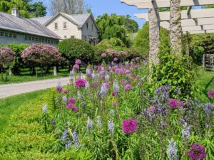 This photo was taken last spring, when lots of our alliums were in bloom - 'Universe,' 'Christophii,' 'Gladiator,' 'Purple Sensation,' and 'Schubertii' are just some of the varieties I plant.
