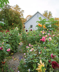 This is Frances' garden on an autumn morning with all the dahlias in bloom. In this book, Frances also shares her tips for growing these colorful flowers. (Photo by Frances Palmer)