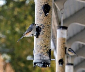 While some birds enjoy eating from the ground, others prefer tube feeders – hollow cylinders with multiple feeding ports and perches. Tube feeders attract small perching birds such as finches, goldfinches, titmice, and chickadees. According to our Audubon Society, more than 125 bird species visit my farm.