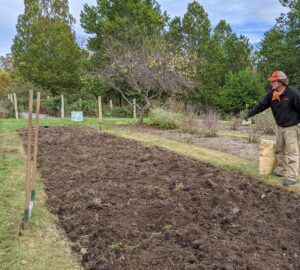 Ryan applies a good amount of triple superphosphate to the bed. When preparing the soil, be sure it has a good balance of organic matter, compost, manure and fertilizer.