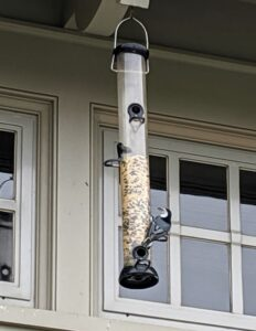 When starting to feed birds, it may take time for new feeders to be discovered. Don't be surprised if the feeding station doesn't get visitors right away. As long as feeders are clean and filled with fresh seed, the birds will find them.