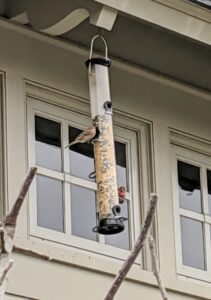 These tube feeders allow the seed to flow only when birds peck at it, which helps keep any spillage to a minimum.