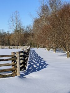 The antique fencing that surrounds my horse paddocks casts wonderful shadows. This side borders my grove of American beech trees, Fagus grandifolia.