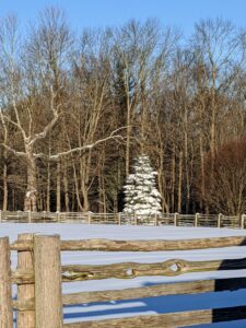 Across the pasture, a single evergreen covered in snow stands among the taller deciduous trees, now bare of all their leaves.