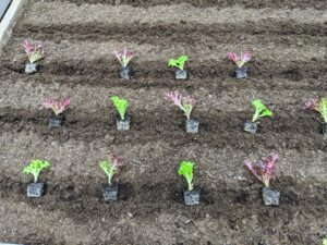 He also planted various seedlings, which were started in my main greenhouse.