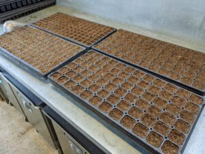When seeding several trays, we often create an assembly line process. It is efficient and fast.