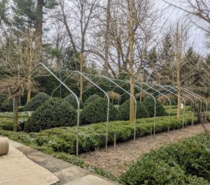 Here is a frame built along one side of the garden. Building the frame at least a foot taller than the tallest shrub protects any heavy snow from weighing down onto the tender foliage. The ground piping is pounded into the ground – each one about four to five feet from the next, and then 10-foot wide bow sections are secured on top – this will last quite a while and give the boxwood a lot of room to grow.