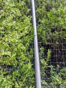 We use these metal pipe stakes to help secure the netting around the boxwood.