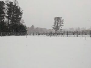 This is a view into the vegetable garden - completely covered in inches of untouched snow.