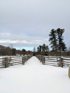 Looking in the other direction, a peek at blue skies, and a nice view down the length of the paddocks with tall white pines on the right. This path between the paddocks extends down to the chicken coops.