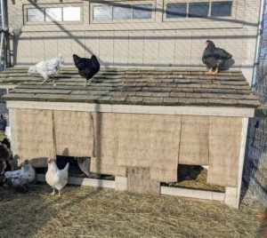 "I devised this ""Good Thing"" for my own geese at the farm to keep the winter winds from entering the hutch at night. This is a double layer of burlap attached to the top of the opening. It allows them easy access in and out."