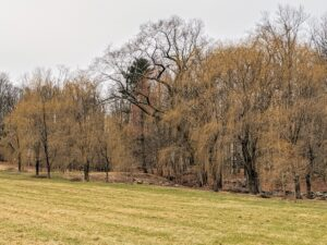And driving back out of the woods, one sees the grove of beautiful weeping willows I planted at the edge the hayfield. What winter chores are keeping you busy? Please share your comments below.