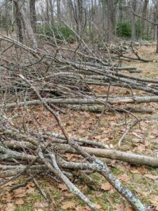 We try to be very neat when doing any chores on the property. It is easier to stack all branches for removal or chipping in the same vicinity, so when the big machinery is brought in, these piles can be chipped right back into the woodland.