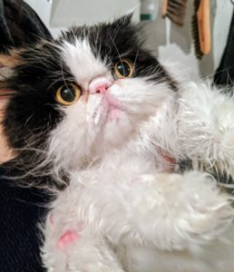 Grooming time is not only a good opportunity to get your pets looking clean and beautiful - it's also a wonderful time to bond with them and check for any other possible abnormalities to the coat and skin.