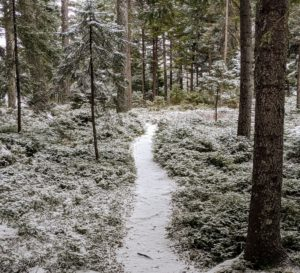 There are many footpaths that meander through Skylands. This one leads from the driveway to the tennis court. Now covered in a light layer of snow, these footpaths are lined with pine needles in summer.