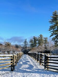 Looking in the other direction - blue, blue skies, and a nice view down the length of the paddocks with tall white pines on the right. This path extends down to the chicken coops.