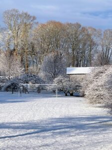 """Nearby is my expansive soccer field or """"party lawn"""", where I love to set-up games for guests during summer parties and where my grandson, Truman, loves to play soccer with friends. On the right, one can see the snow covered roof of the old corn crib and the weeping hornbeams. We prune these regularly to keep their beautiful shapes."""