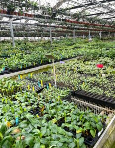 98-percent of all the plants are propagated at Logee's.