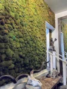 """Ryan has one room dedicated to growing moss. Here is one wall of the """"moss room."""""""