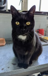 And you all know Blackie, my greenhouse cat. He is extremely friendly. Hi Blackie - I think you're next. Ready for grooming?