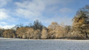 This is one of two lower hayfields. On one side, the weeping hornbeams add a light golden hue to the winter landscape.