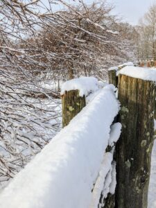 I love how snow collects on this 100-year old white spruce fencing I purchased in Canada. This fencing is what surrounds all my paddocks at the farm.