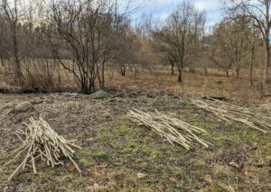 I instruct my outdoor grounds crew to clear really well and to remove all the underbrush to be composted or chipped. These are piles of thick invasive thorny plants that are also cut down.