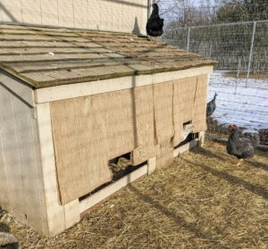 "I devised this ""Good Thing"" for the geese to keep the winter winds from entering their hutch at night. This is a double layer of burlap attached to the top of the opening. It allows them easy access in and out."