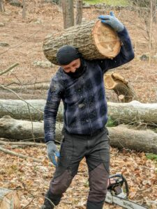 The fallen trees are cut into smaller, more manageable pieces. Here is Domi carrying one of pieces to the pile.