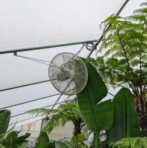 Fans strategically placed around the greenhouse help to circulate the air.