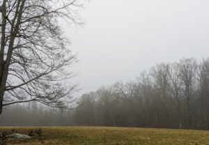 The edge of the lower hayfield looks eerie under cloudy skies and fog.