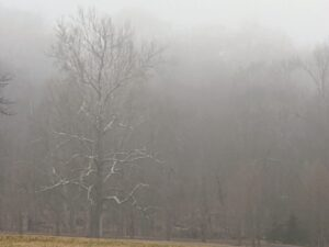 """And in the back hayfield, visibility is even lower. On the left is the mighty sycamore - the symbol of my farm. Fog reduces visibility below one-kilometer, or six-tenths of a mile, making it very difficult for driving or even walking. Some describe fog to be """"as thick as pea soup"""". This was originally used to describe the dingy yellow smog from burning soft coal common in Europe. Such fogs occurred in London until the Clean Air Act of 1956."""