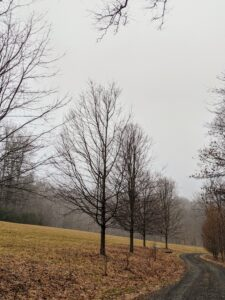 The deciduous trees are bare now, but come spring, all these trees will be filled with foliage, giving the farm a completely different look.