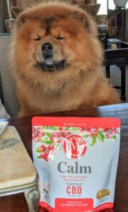 Here's Han keeping his eye on everything. Han will soon be three years old. He's a very handsome Chow Chow and loves everyone. He is also a very calm dog, but for those that need it, our CBD Calm includes chamomile to help dogs cope with everyday stress.